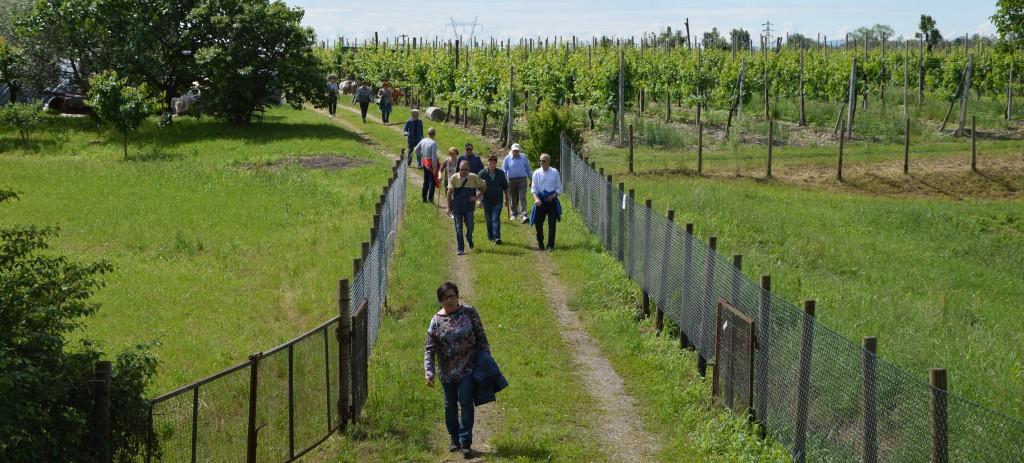 """Tradizionale """"camminata"""" tra le colline di San Michele"""